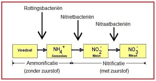 biologische filtering in aquaria en vijvers